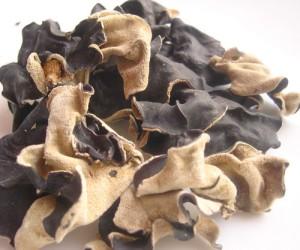 грибы паразиты есть ли от них польза